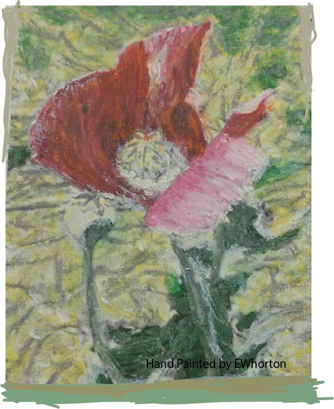 Amapola-Poppy-Flower