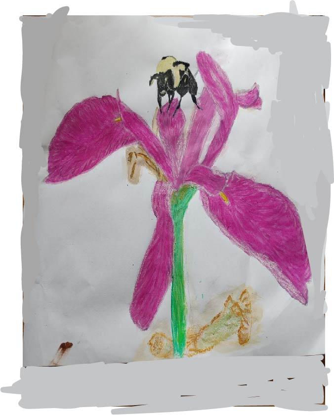 Violet Iris